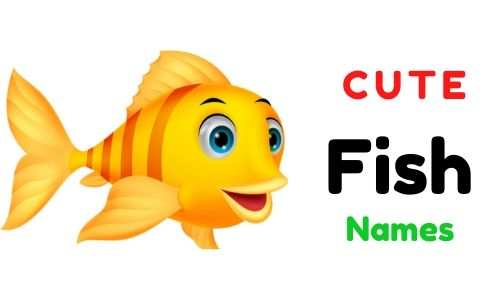 Cute Fish Names