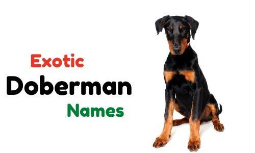 Exotic Doberman names