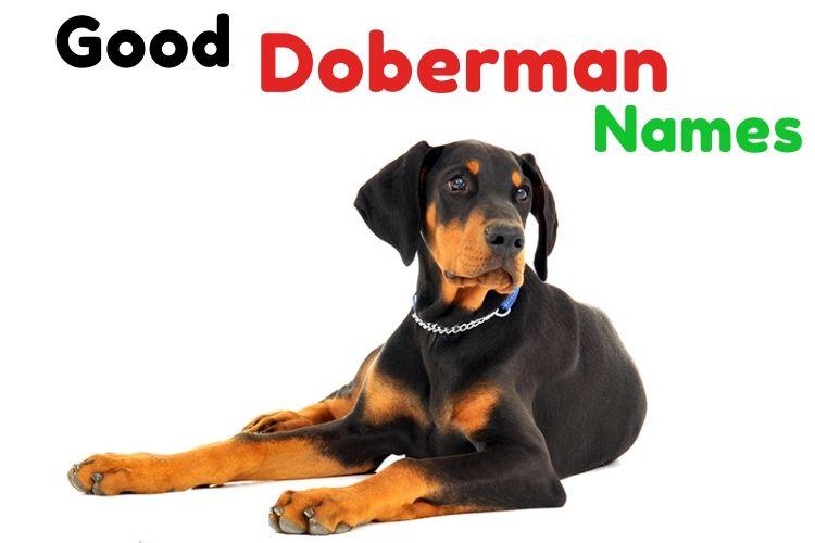 Good Doberman names
