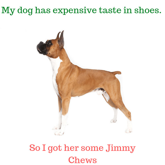 My dog has expensive taste in shoes. So I got her some Jimmy Chews