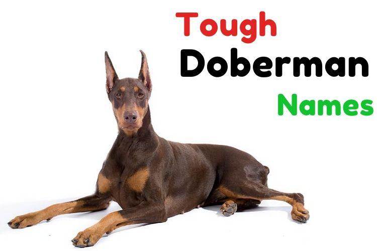 Tough Doberman names