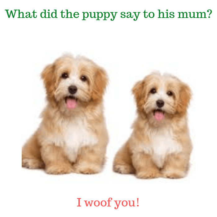 What did the puppy say to his mum I woof you