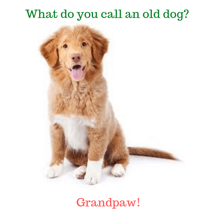 What do you call an old dog Grandpaw!