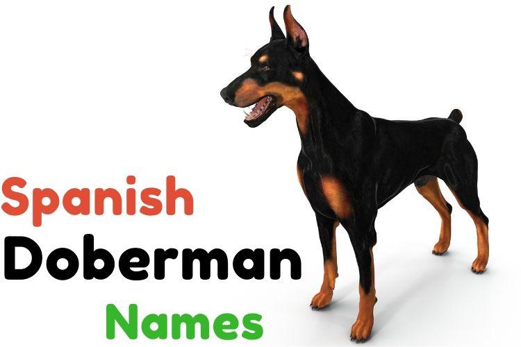spanish doberman names