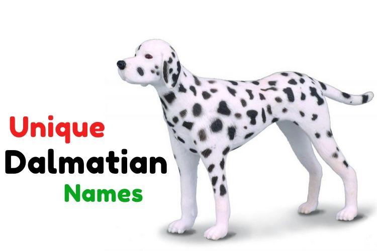 unique dalmation names